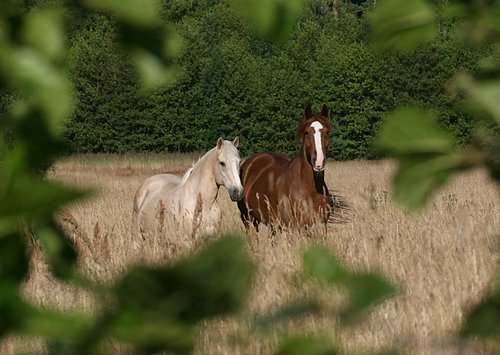 http://www.loodusajakiri.ee/lf2005/images/ArtoRandelServet-hobused.jpg