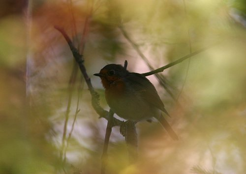 http://www.loodusajakiri.ee/lf2005/images/ArtoRandelServet-punarind.jpg