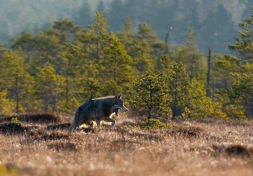 http://www.loodusajakiri.ee/lf2005/images/SvenZacek-hunt.jpg