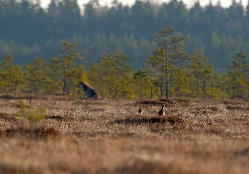 http://www.loodusajakiri.ee/lf2005/images/SvenZacek-huntjako.jpg