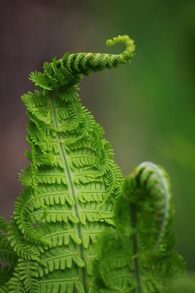 taimefotode 1. auhind - Kairi Kalmann