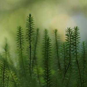 väikese taime eriauhind noorte vanuseklassis  - Mati Lepikson
