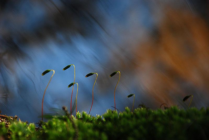 Eve Käär - Väike taim