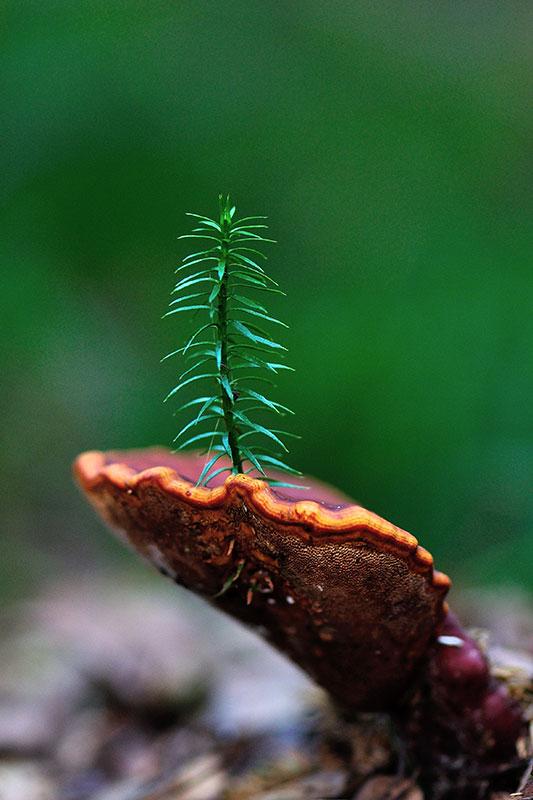 Priit Pent - väikese taime eriauhind