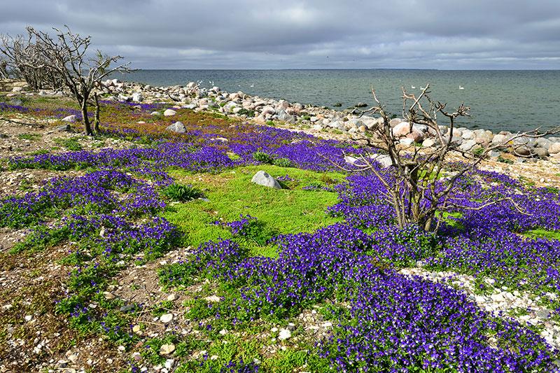 Tõnu Noorits - Eesti Looduse eriauhind