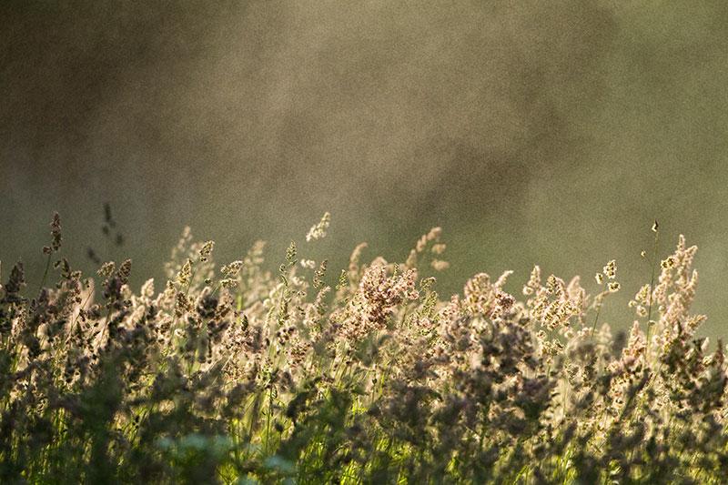 Ingmar Muusikus - taimefotode peaauhind