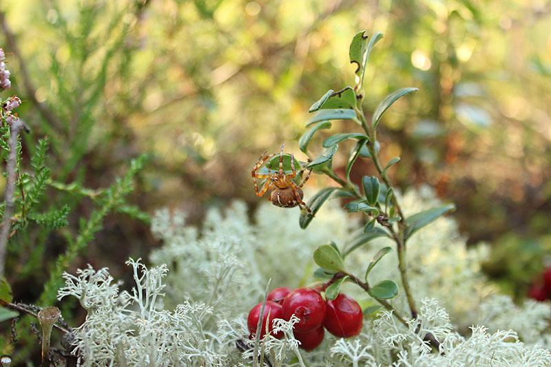 Geteli Hanni - taimefotode peaauhind, noored