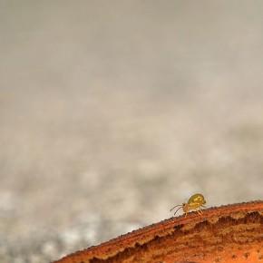 Eimar Kull - eriauhind väikese looma foto eest
