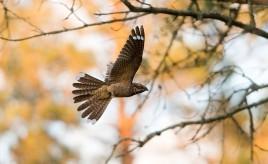 Reet Sau - Eesti Looduse eriauhind