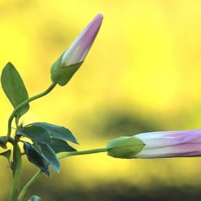 Geteli Hanni - taimefotode peaauhind