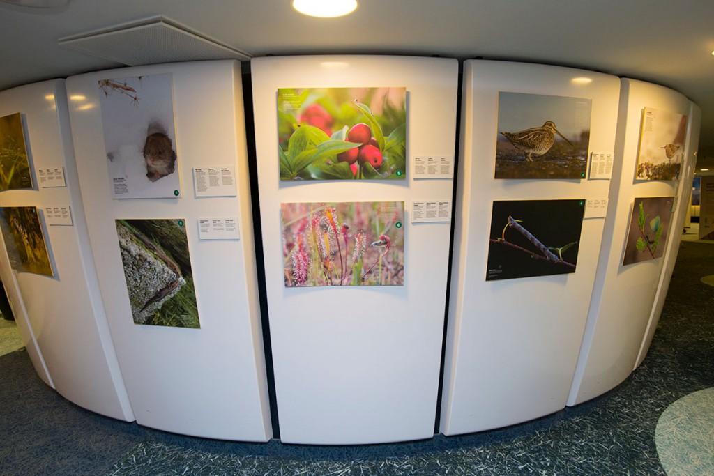 Koostöös RMK-ga avati Eesti Looduse fotovõistluse parimate tööde näitus 2016. aasta märtsis RMK Tallinna majas. 16. aprillini 2017 on näitus avatud Tallinna Teletornis.Foto: Aivar Pärtel.